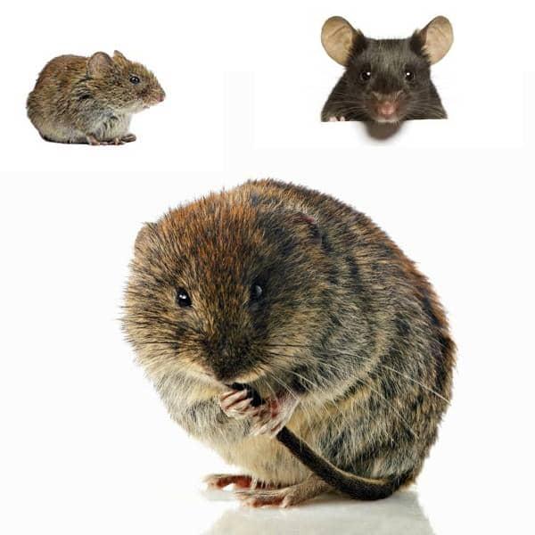 جلوگیری از حمله موش ها به خانه از طریق دستگاه صوتی