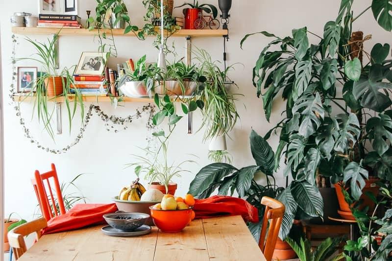 گیاهان آپارتمانی 1 طراحی دکوراسیون داخلی